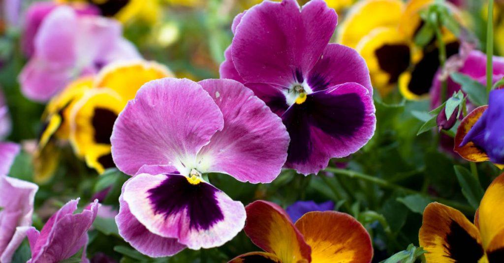 Midwest Spring Gardening Tips