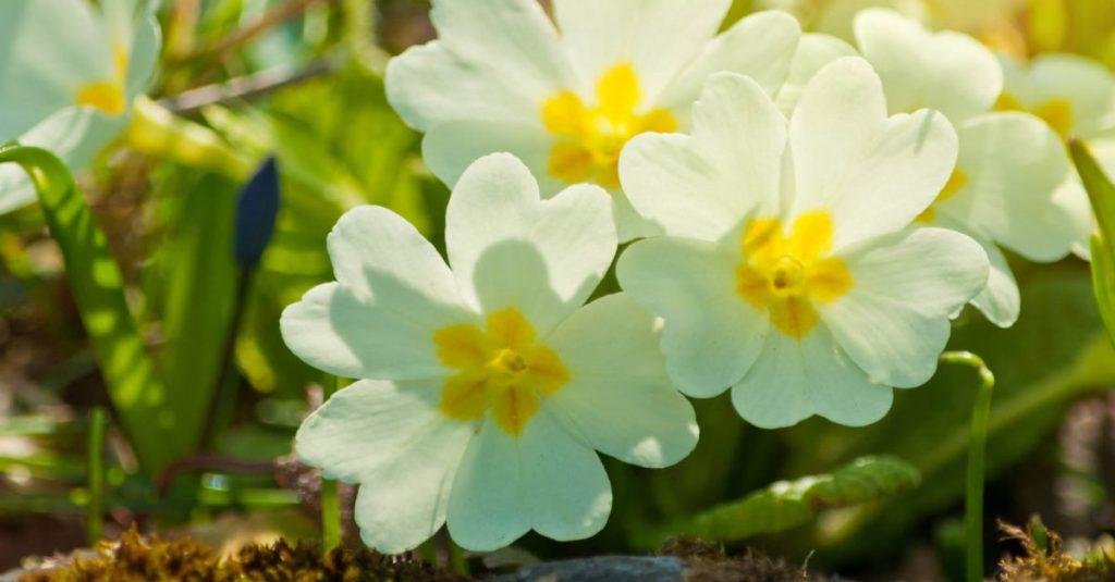 Pacific Northwest Spring Gardening Tips