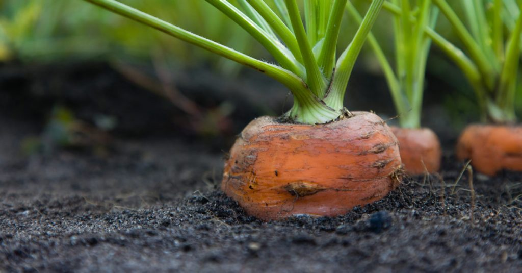 Vegetables You Can Buy Once and Regrow Forever!