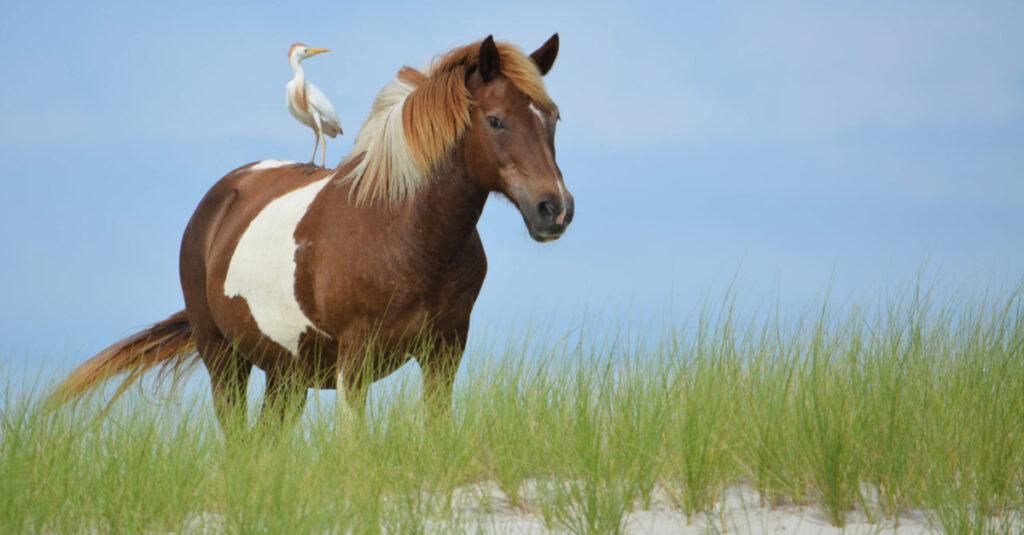 Foals, fowl, and fun
